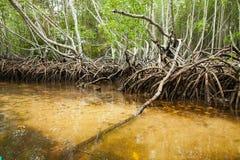 Tropikalni mangrowe bada z kajakiem Nusa Lembongan, Indonezja Fotografia Stock