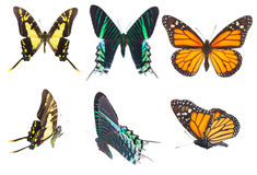 Tropikalni motyle ustawiający Fotografia Royalty Free