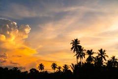 Tropikalni palmowi kokosowi drzewa na zmierzchu niebie obrazy royalty free