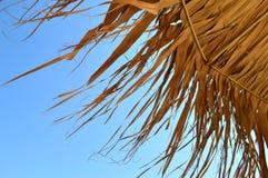 Tropikalni parasoli szczegóły Zdjęcie Stock