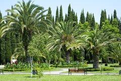 tropikalni piękni ogrodowi drzewka palmowe fotografia royalty free