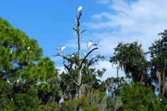 Tropikalni ptaki, Floryda grąz Zdjęcia Royalty Free
