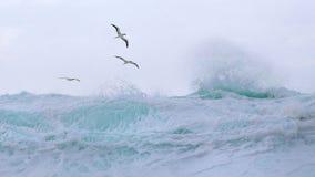 Tropikalni ptaki wznoszą się nad fala Obrazy Stock