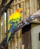 Tropikalni ptasi papug spojrzenia przy drzewem zdjęcia royalty free