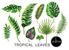 Tropikalni realistyczni palmy, monstera, banana i paproci liście, Set odizolowywający na białym tle również zwrócić corel ilustra ilustracja wektor