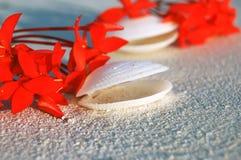 Tropikalni Seashells na plaży Fotografia Stock