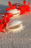 Tropikalni Seashells na plaży Obraz Royalty Free