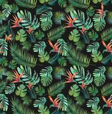 Tropikalni Tapetowi Bezszwowi Tekstylni druk dżungli ptaki raj royalty ilustracja