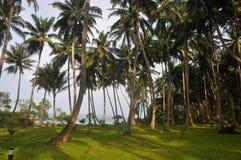 Tropikalni wysp drzewka palmowe Obrazy Royalty Free