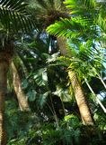 Tropikalny obraz royalty free