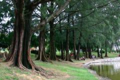tropikalny Zdjęcia Stock