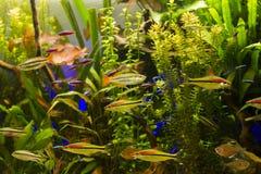 Tropikalny akwarium Zdjęcia Stock