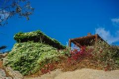 Tropikalny alkierz w czerwonym morzu Obraz Royalty Free