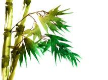 Tropikalny bambus z liśćmi royalty ilustracja