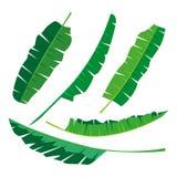 Tropikalny banan Opuszcza kolekcję, odizolowywa wektor Set Zdjęcie Stock