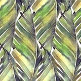 Tropikalny bananowy palma liści wzór royalty ilustracja