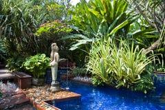 tropikalny basenu dopłynięcie Obraz Stock
