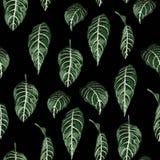 Tropikalny bezszwowy wzór z egzotycznymi drzewo liśćmi royalty ilustracja