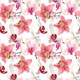 Tropikalny bezszwowy wzór z różowymi orchidea kwiatami Zwrotnik kwiecista tapeta odizolowywająca na białym tle egzot Fotografia Royalty Free