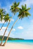 Tropikalny biały piasek z drzewkami palmowymi Obrazy Royalty Free
