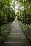 tropikalny bridżowy lasowy zawieszenie fotografia royalty free