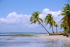 Tropikalny brzeg z drzewkami palmowymi Fotografia Royalty Free