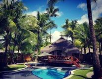 Tropikalny cavanna w naturze zdjęcie royalty free