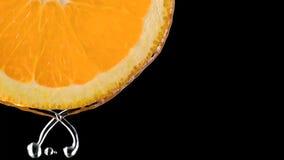 Tropikalny citurs owoc plasterek spada w wodzie obraz stock