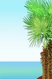 Tropikalny denny brzeg z drzewkami palmowymi Fotografia Royalty Free