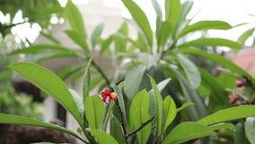 Tropikalny deszcz w ogródzie outdoors Egzota zielony i popielaty tło Bali wyspa, pada sezon Indonezja zbiory wideo