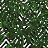 Tropikalny druk dżungli bezszwowy deseniowy Wektorowy zwrotnika lata motyw z Hawajskimi kwiatami Zdjęcie Stock