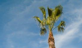 Tropikalny drzewko palmowe Obraz Royalty Free