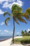Tropikalny drzewko palmowe Obraz Stock