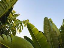 Tropikalny drzewko palmowe Abstrakcjonistyczna palmowa tekstura dla natury tła Obrazy Royalty Free