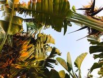 Tropikalny drzewko palmowe Abstrakcjonistyczna palmowa tekstura dla natury tła Zdjęcia Stock