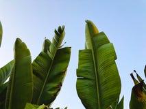 Tropikalny drzewko palmowe Abstrakcjonistyczna palmowa tekstura dla natury tła Zdjęcie Royalty Free