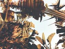Tropikalny drzewko palmowe Abstrakcjonistyczna palmowa tekstura dla natury tła Obraz Stock