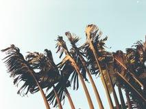 Tropikalny drzewko palmowe Abstrakcjonistyczna palmowa tekstura dla natury tła Fotografia Royalty Free