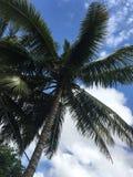 Tropikalny drzewko palmowe i niebo Zdjęcie Royalty Free