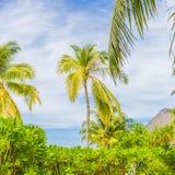 Tropikalny drzewko palmowe z słońca światłem na zmierzch chmury i nieba abstrakta tle Wakacje i natury podróży przygody pojęcie fotografia royalty free