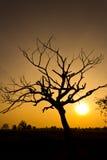 Tropikalny drzewo Obrazy Stock