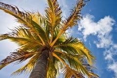 Tropikalny drzewo Fotografia Stock