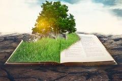 Tropikalny drzewo na książce Obrazy Royalty Free
