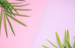 Tropikalny egzamin próbny up: palma opuszcza na kolorowym menchii i purpur tle samochodowej miasta pojęcia Dublin mapy mała podró Zdjęcie Stock