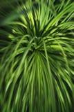Tropikalny greenery natury tło, zielony agawa urlop, zamazujący Obrazy Stock