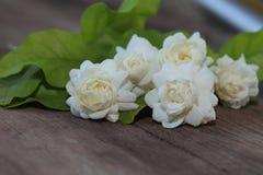Tropikalny jaśminowy kwiat na drewnie Jaśminów liście na br i kwiaty Fotografia Royalty Free