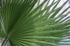 Tropikalny jaskrawy - zielona drzewko palmowe gałąź w górę Abstrakcjonistyczna naturalna tekstura, egzotyczny geometryczny zielon zdjęcie stock