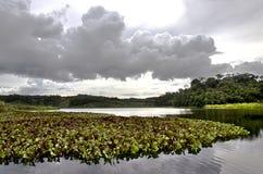 Tropikalny jezioro z roślinami i lasem Obrazy Stock