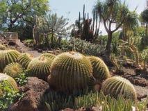 Tropikalny kaktusa ogród Zdjęcie Royalty Free