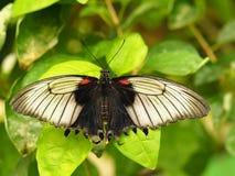 Tropikalny kolorowy motyl obrazy royalty free